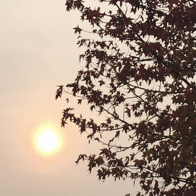 kleinerotterdammer herfst zon rotterdam geenfiltertjenodig pink autumn