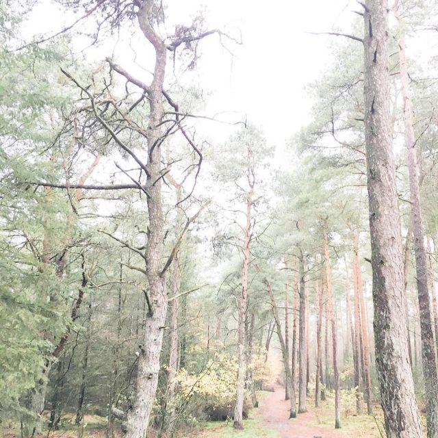Ok doei kleinerotterdammer opreis veluwe gelderland weekendbreak weekendaway iksnaphem natuurhellip