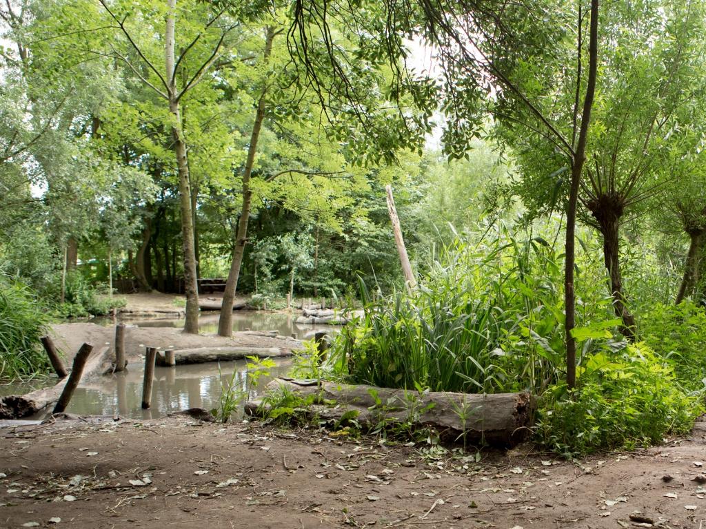 Natuurspeeltuin in Rotterdam